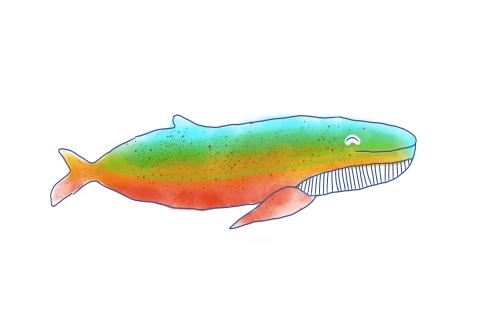 Colour Whale