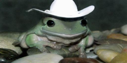 frog in a cowboy hat